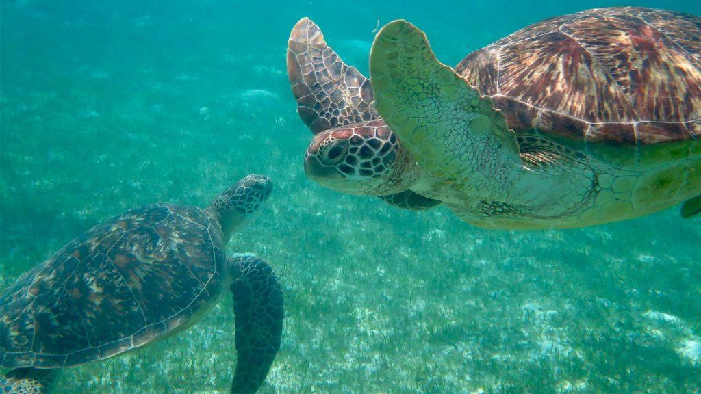 turtle-2 (1)