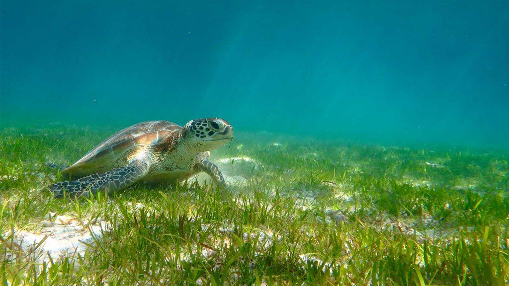 turtle-1 (1)