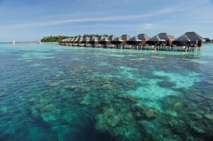 Ayada Maldives coral reef (6)
