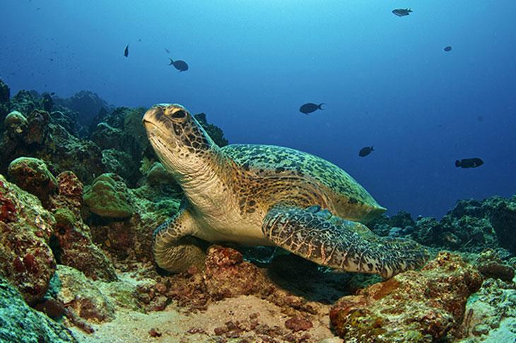 Six-Sense-Laamu-Turtles