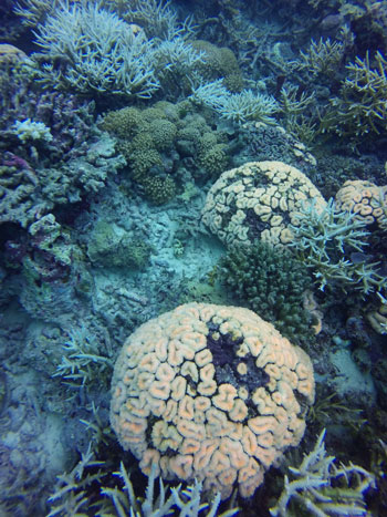 the-dying-reefs-1