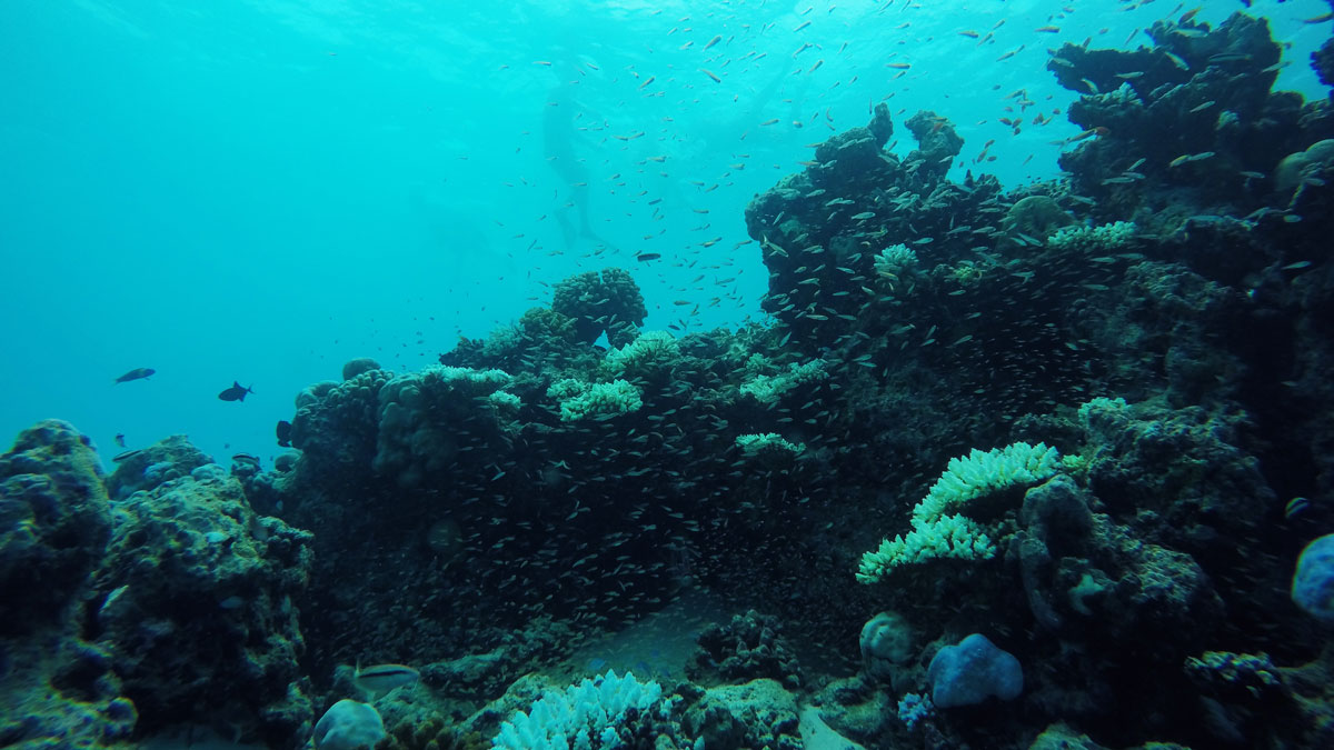 the-dying-reefs-2