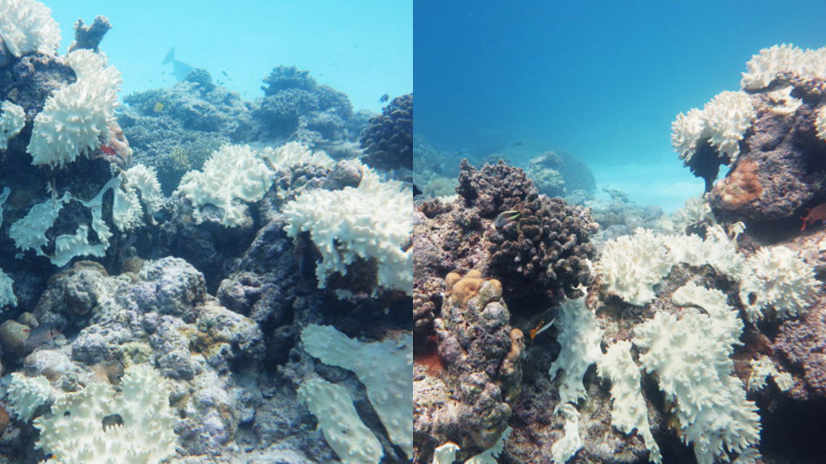 the-dying-reefs-4