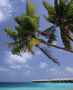 Maldives Coco Bodu hithi
