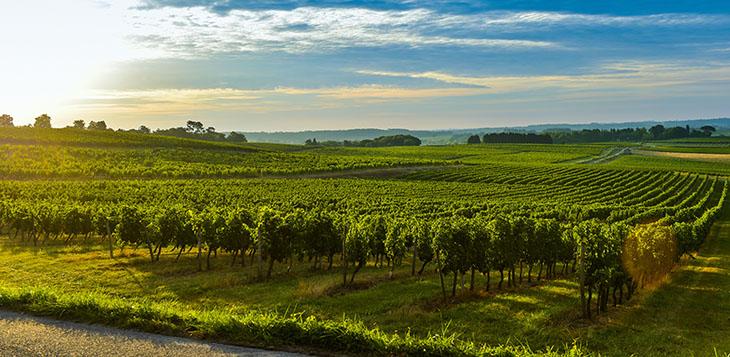Wine Trends Article