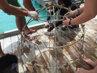 Coral planting at Six Senses Laamu