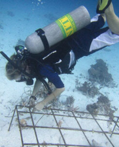 Outrigger Maldives coral regeneration